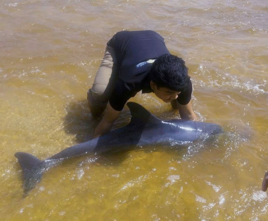 Mohd Nur Aiman Suhaimi rescuing the beached dolphin.