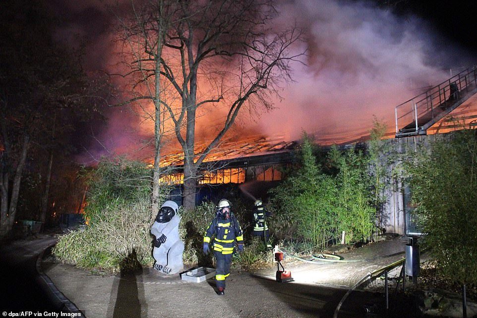 Firefighters working at the burning monkey house.