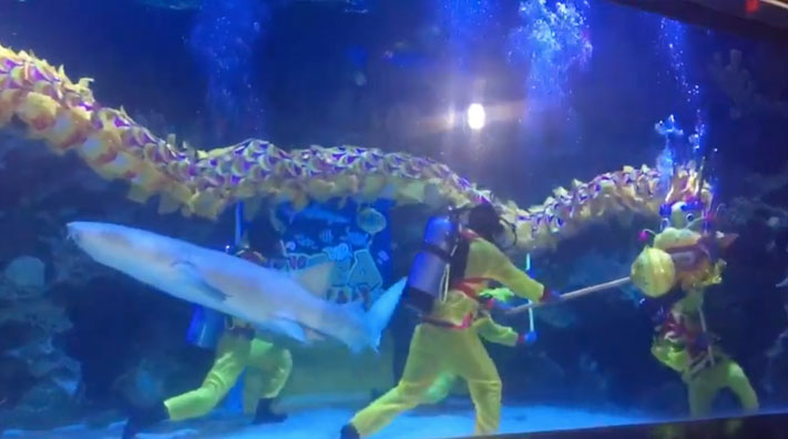 A shark entered the scene amidst the underwater dragon dance performance.