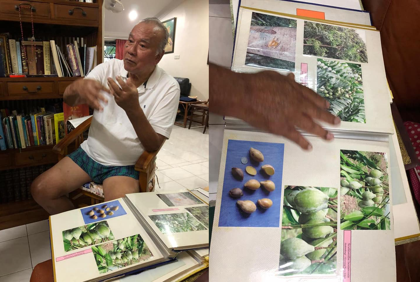 James Kingham showing Ong species of mangosteens and other forest fruits.