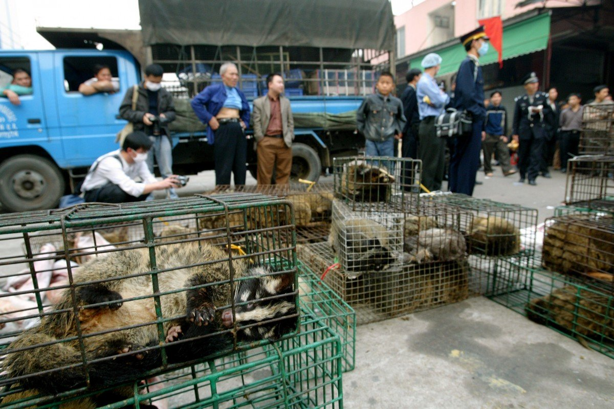 Civet cats on sale at a market in Guangzhou in 2004.