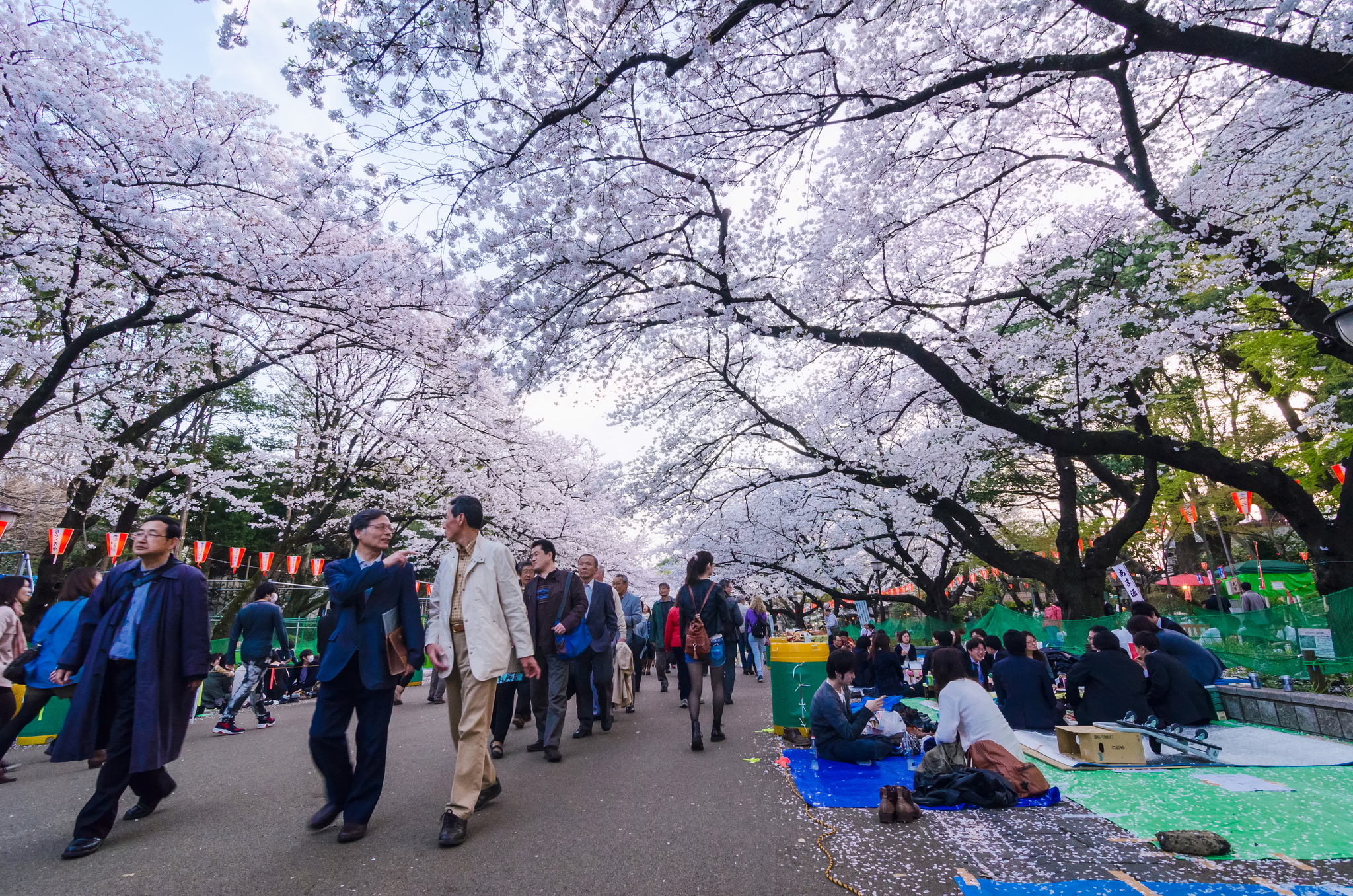 Crowds enjoying the blooming cherry blossom trees in Ueno Park, Tokyo.