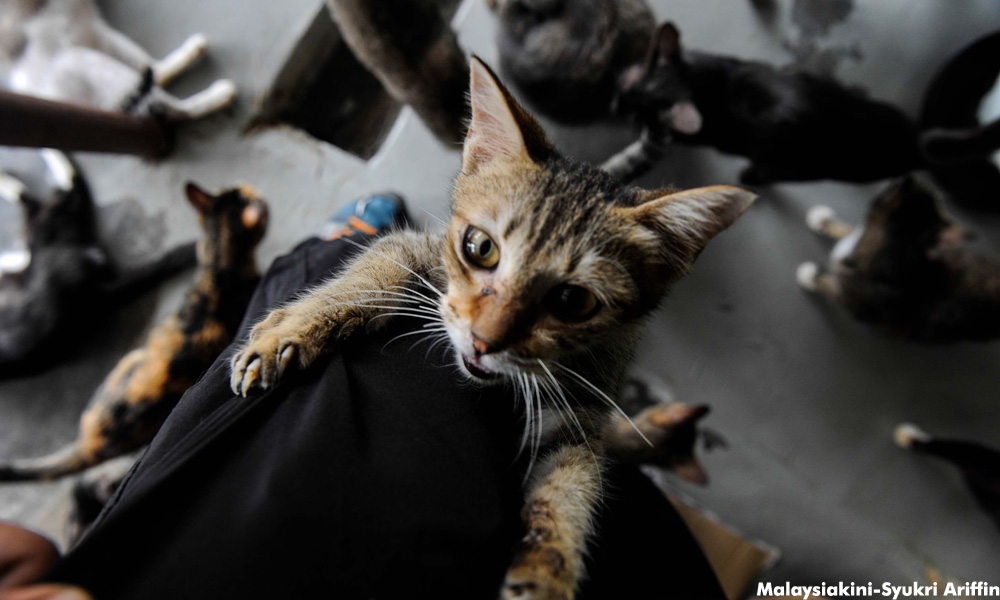 Image from Syukri Ariffin/Malaysiakini