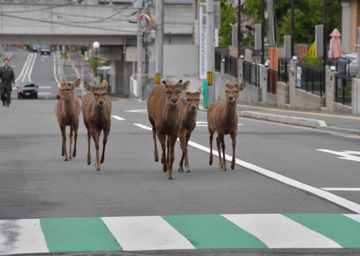 Image from Yoshiyuki Hirakawa
