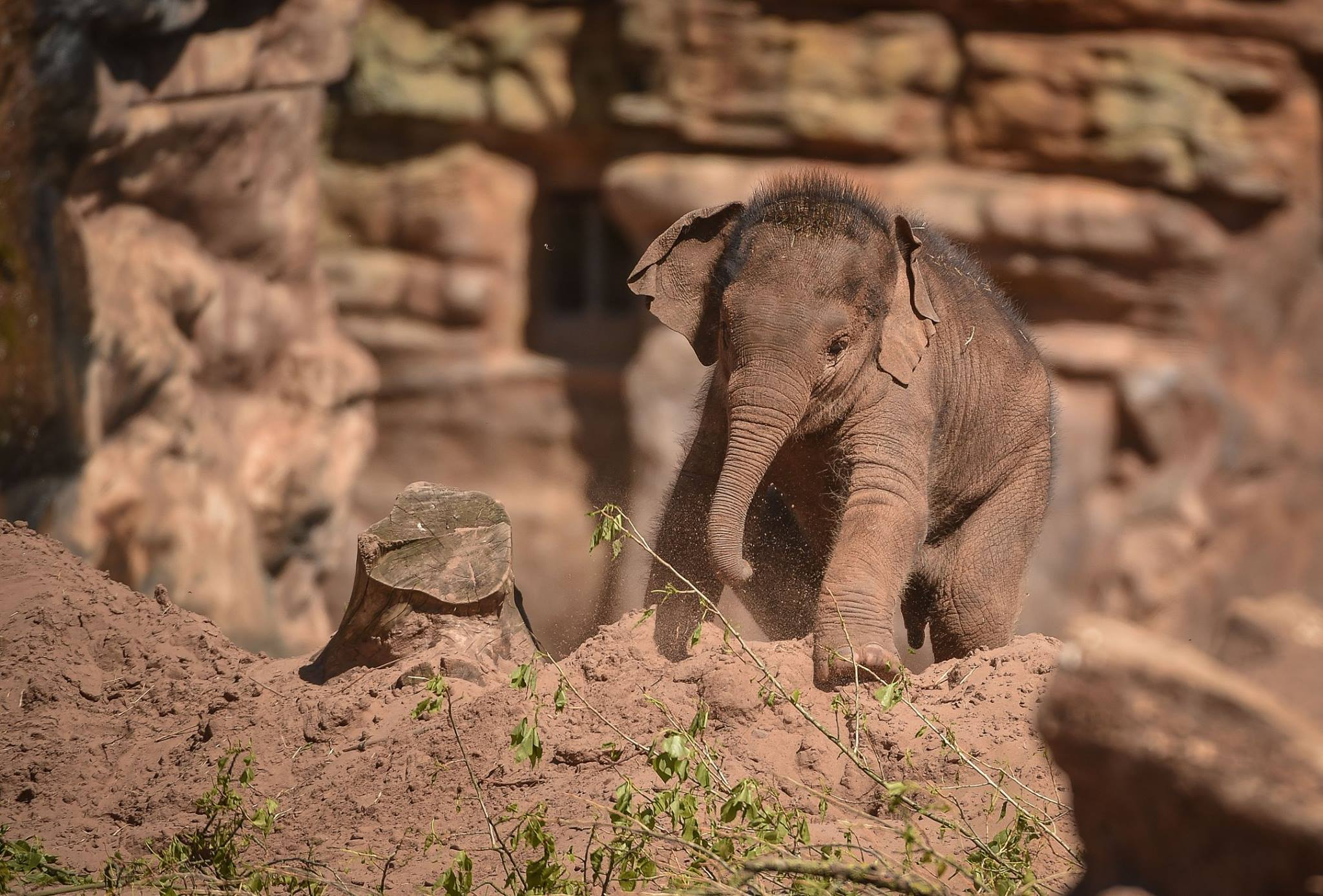 Image from Chester Zoo/Facebook