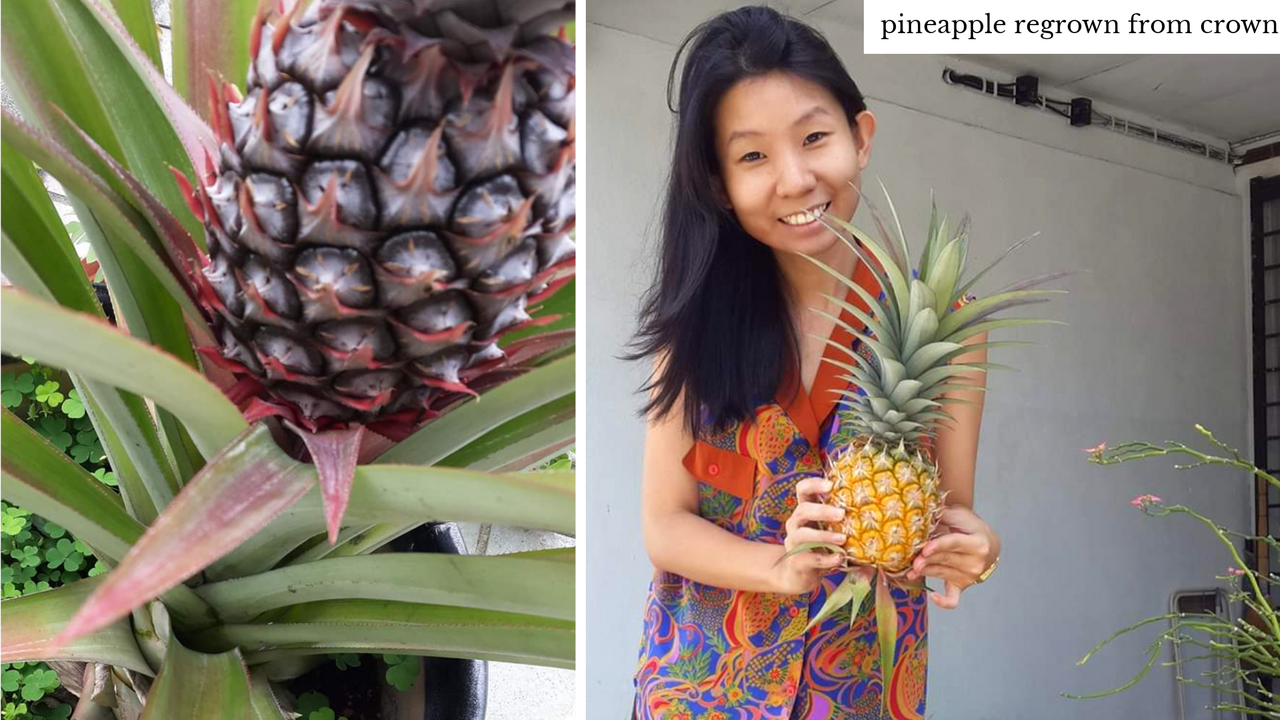 Some of the produce Lim grew in her family home included okra, aubergine, gourds, and pineapples.