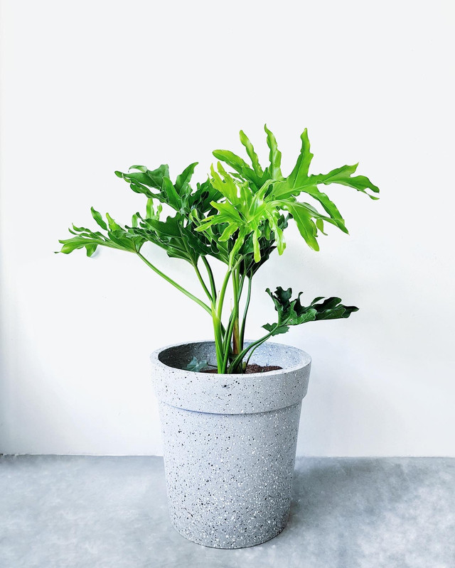 Image from Uproot Plants (Provided to SAYS)