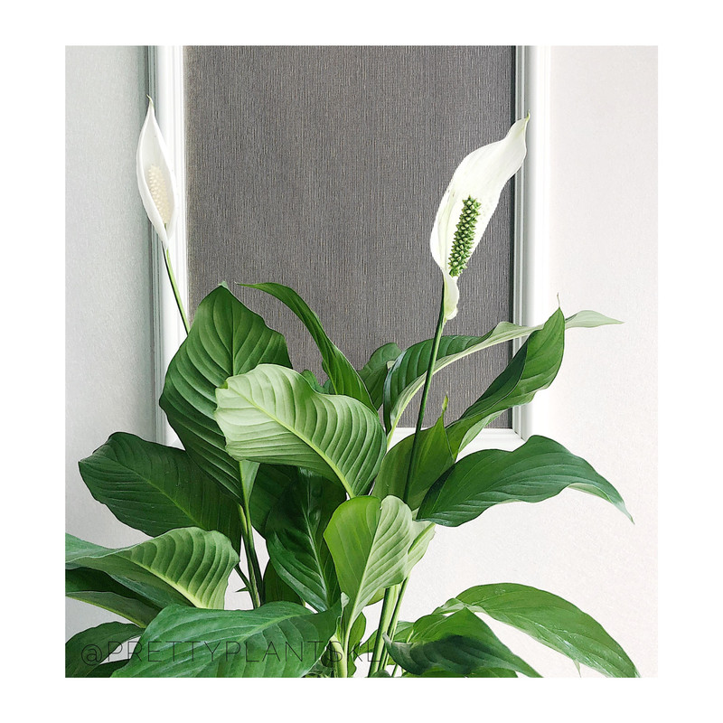 Image from Pretty Plants KL (Provided to SAYS)