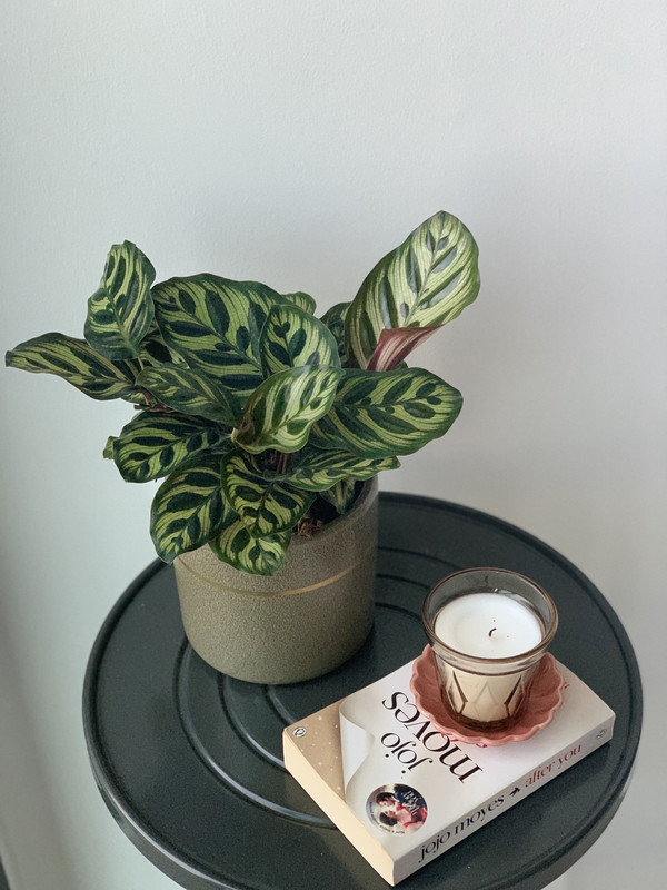 Image from Akar Plant Studio (Provided to SAYS)