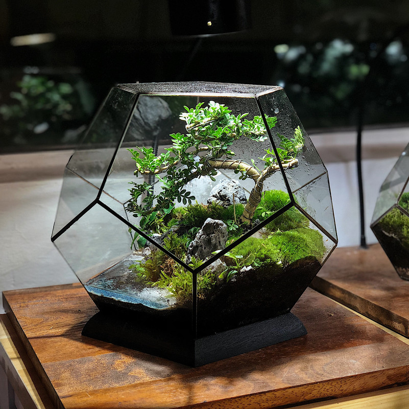 Image from Mossarium (Provided to SAYS)