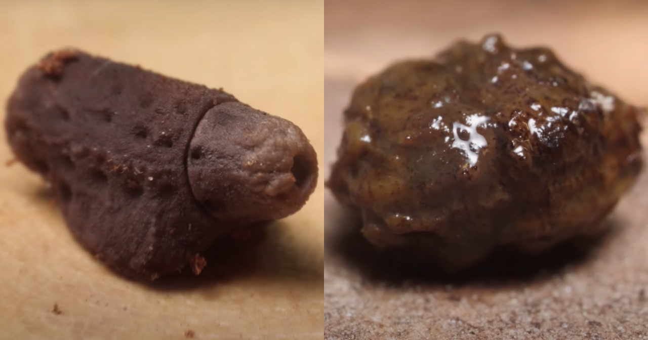 Comparison of a giant leaf insect's egg (left) and their poop (right).