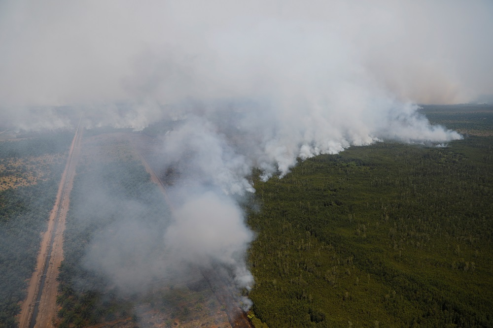 Smoke covering trees during a forest fire next to a palm plantation in Palangka Raya, Central Kalimantan province last year.