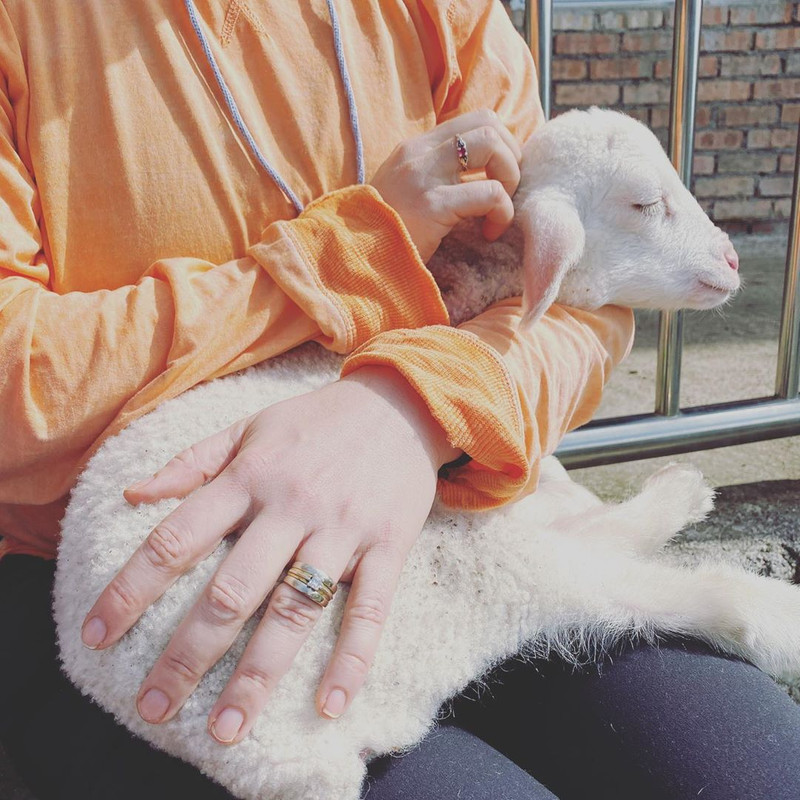 A visitor shared how this little lamb napped on her lap for a good 20 minutes. Too cute!