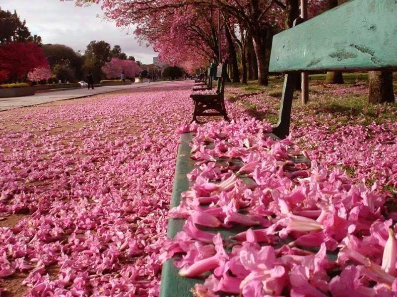 Image from Blog Sha My Heart