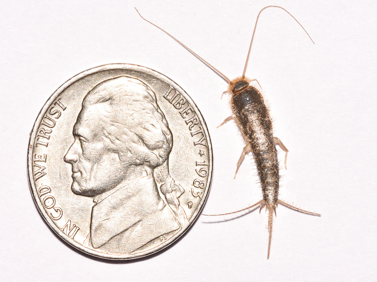 Image from PestWorld.org