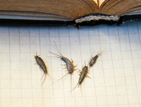 Image from Plunkett's Pest Control