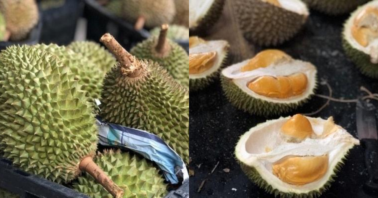 Image from Durian Bear