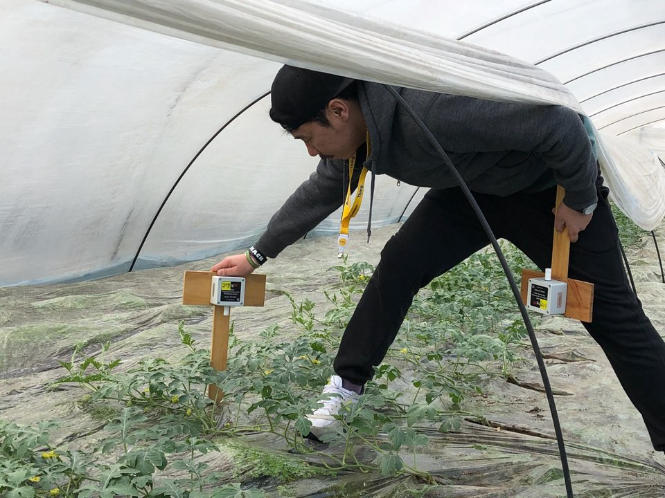 This image shows an example of how IoT technology is used in greenhouses. The sensor reads the greenhouse's temperature and humidity levels.
