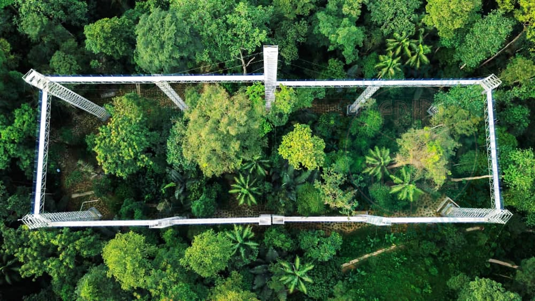 The 'Forest Skywalk' will open on 31 August, with an entrance fee of RM15 per adult (MyKad holders) and RM40 (non-MyKad holders).