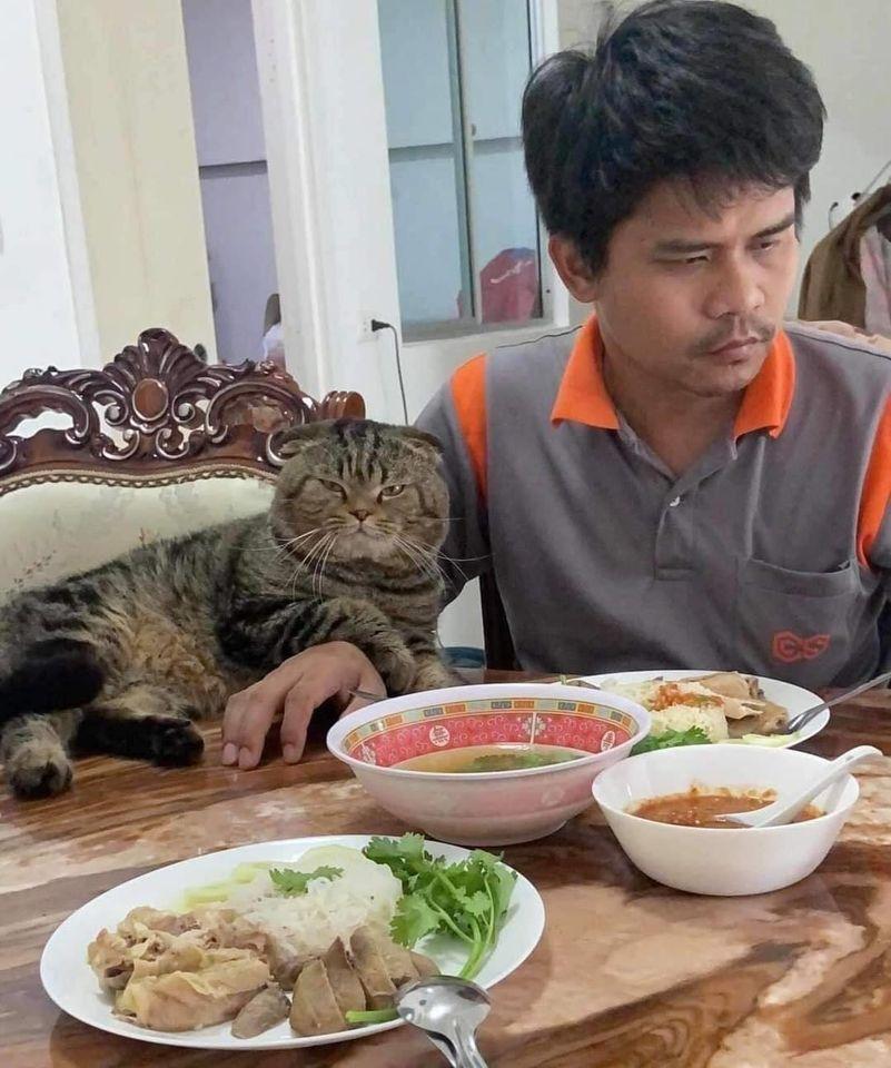 Image from Nasrin Hami/Super Cats (Facebook)