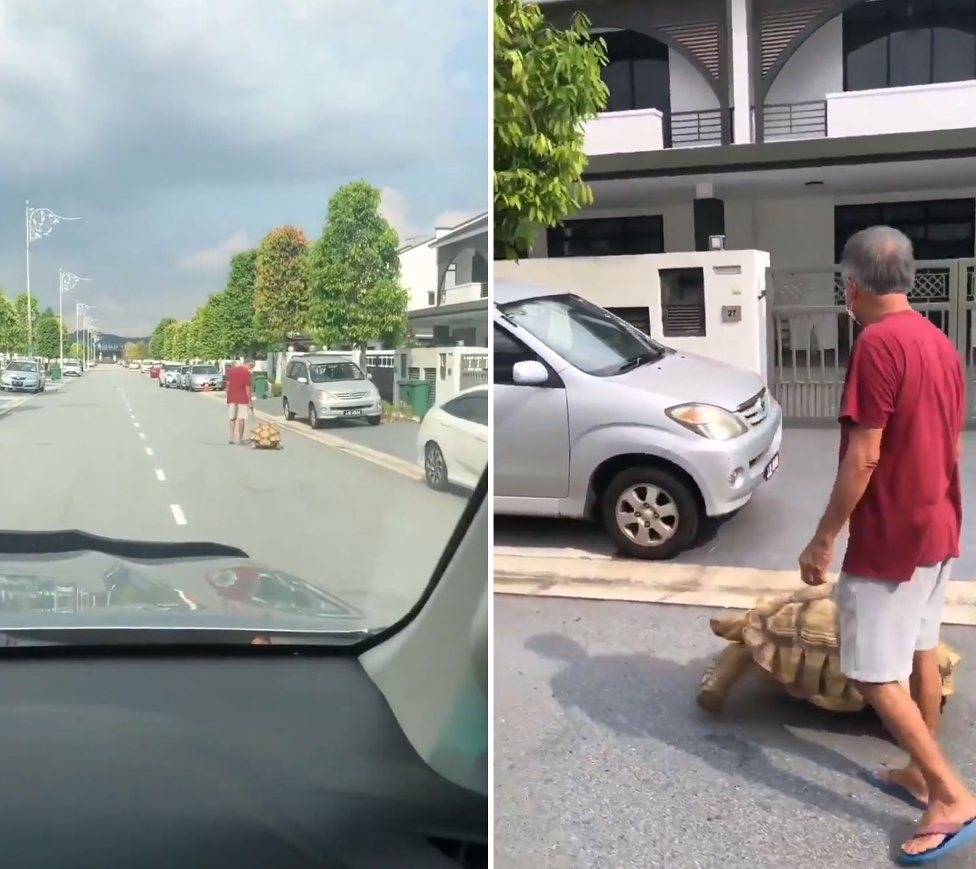 Video Captures Man Taking his Tortoise Out for a Walk in the Locality, Goes Viral
